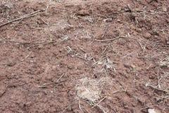 Erdboden umfasst mit Kompostlaubdeckenfragment als Beschaffenheitsba Stockfoto