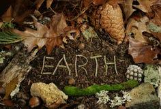 Erde buchstabierte in den Zweigen auf Waldfußboden stockbild