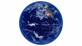Erde, die auf Weiß (nahtlose, sich dreht Schleife) stock video