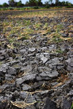 Erde gerieben für Anlage irgendein Getreide Lizenzfreie Stockbilder