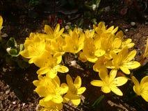 Erde und gelbe Blumen Stockfoto