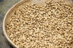 Erdnüße, die getrocknet werden Stockfoto