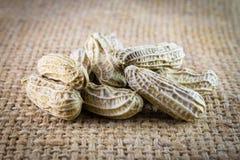 Erdnüsse auf Leinwand Stockfotografie