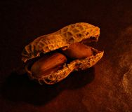 Erdnüsse im Shell Lizenzfreie Stockbilder