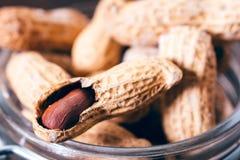 Erdnüsse im Shell Stockbilder