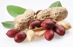 Erdnüsse mit Blättern. Stockfoto