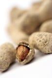 Erdnüsse schließen oben Lizenzfreie Stockbilder