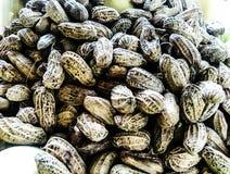 Erdnüsse sind ziemlich dunkel stockbilder