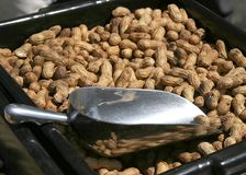 Erdnüsse und Schaufel Stockbild