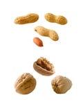 Erdnüsse und Walnüsse Stockfotografie