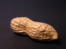 Erdnuss stockfotografie