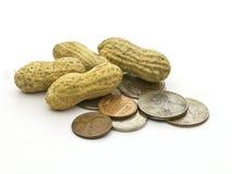 Erdnuss-Einkommen Lizenzfreie Stockfotos
