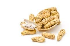 Erdnuss oder Erdnuss (Erdnuss hypogaea L.) lizenzfreie stockfotografie
