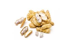 Erdnuss oder Erdnuss (Erdnuss hypogaea L.) Stockfotos