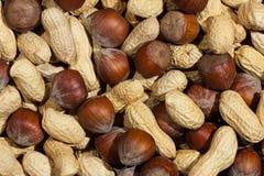 Erdnuss- und Haselnussbeschaffenheit Stockfotos
