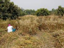 Erdnussbauernhof Stockbild