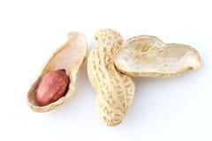 Erdnussnuß auf weißem Hintergrund Stockfoto