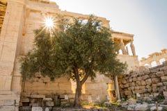 Erechtheionen och den legendariska olivträdet, Aten, Grekland arkivbilder