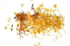 Часть цветков ноготк настолько красивых, желтый цветок ноготк, erecta Tagete стоковая фотография rf