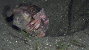 Eremita del Cancro nelle coperture subacquee in oceano di fauna selvatica Filippine video d archivio