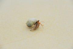 Eremita krab na dennych pogodnych plażach Obrazy Royalty Free