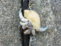 Eremita krab na plaży, Onna, Okinawa Obraz Royalty Free