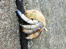 Eremita krab, Onna, Okinawa Zdjęcie Royalty Free