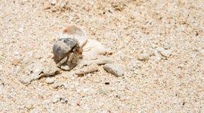 Eremita krab przy tajemnicy wyspą Obraz Stock