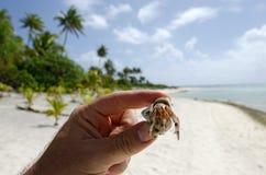Eremita krab w Aitutaki laguny Kucbarskich wyspach Fotografia Royalty Free