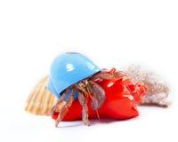 Eremita krab w Błękitnym Shell Obrazy Royalty Free