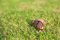 Eremitkrabba i gräset Arkivfoton