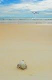 Eremitkrabba på soliga stränder för hav Royaltyfria Bilder