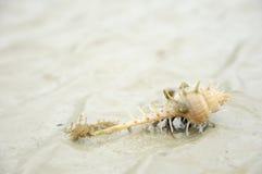 Eremitkrabba på stranden Arkivbild