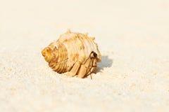 Eremitkrabba på stranden Arkivfoto
