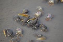 Eremitkrabbor i en tidvattenpöl royaltyfri fotografi