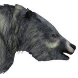 Eremotherium Sloth Head Stock Images