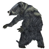 Eremotherium Sloth on White Stock Images