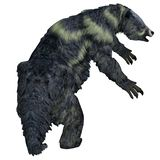 Eremotherium Sloth Tail royalty free stock images