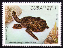 Eretmochelys Imbricata, serie poświęcać żółwie, około 1983 Fotografia Royalty Free