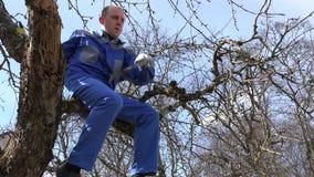 Erfahrene Züchtermannbeschneidung verzweigt sich mit Scheren hoch auf Baum auf blauem Himmel stock video