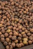 Erfassung der Kartoffelernte Metallim ländlichen Laufkatzenwarenkorb auf organischem Lizenzfreie Stockfotografie