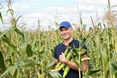 Erfassung von Mais auf Feld Lizenzfreie Stockfotografie