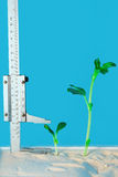Erfolge im Wachstum Stockfotografie