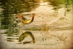 Erfolgreicher Fischenmoment Lizenzfreie Stockfotos