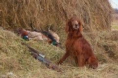 Erfolgreicher Vogeleintragfaden Lizenzfreie Stockbilder