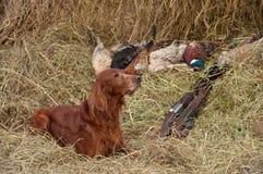 Erfolgreicher Vogeleintragfaden Lizenzfreies Stockbild