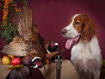 Erfolgreicher Vogeleintragfaden, Studio, clous-up Lizenzfreies Stockbild
