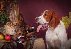 Erfolgreicher Vogeleintragfaden, Studio, clous-up Stockfotografie