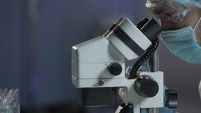 Erforschen Sie den Analytiker, der Mikroskop justiert, um Rot und weiße Blutkörperchen zu ermitteln stock footage