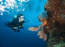 Erforschendes Korallenriff des Sporttauchers der jungen Frau lizenzfreie stockfotos